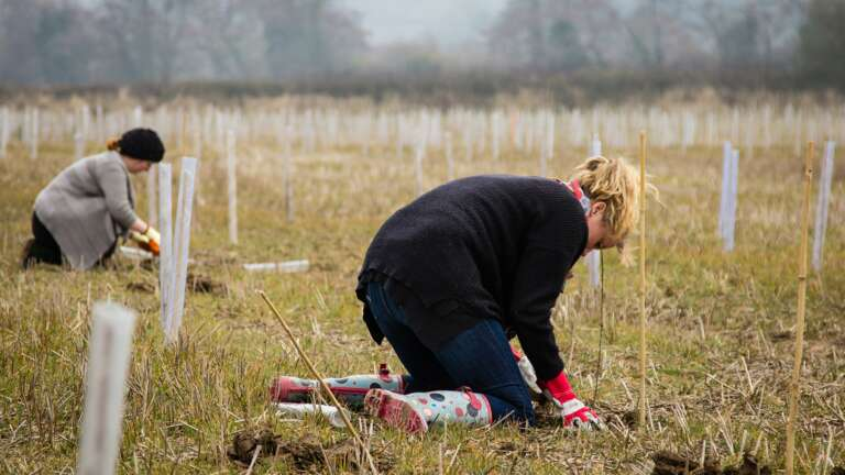 People plant trees to offset carbon emissions in the UK